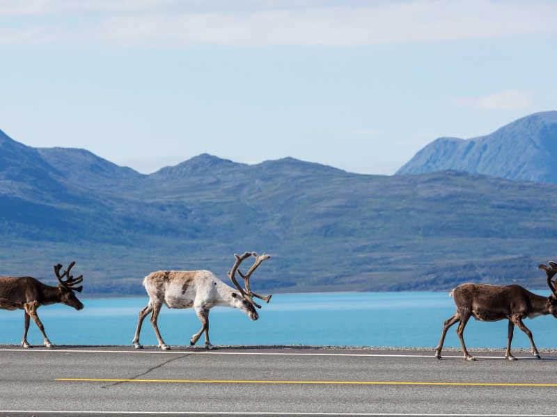 Νορβηγία-εκδρομή-diontours.com