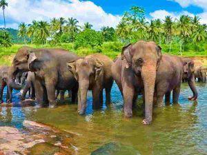 Σρι Λάνκα-εκδρομή-diontours.com