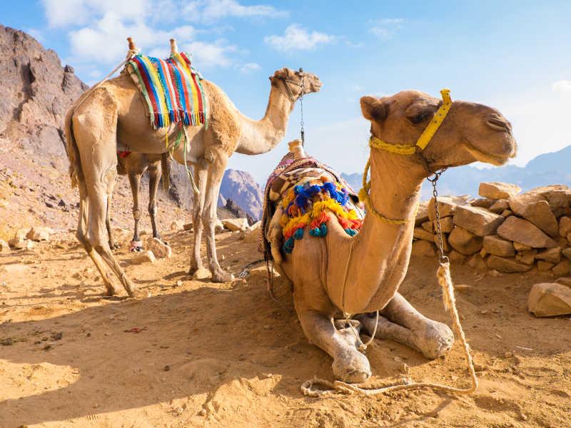 Αίγυπτος-εκδρομή-diontours.com